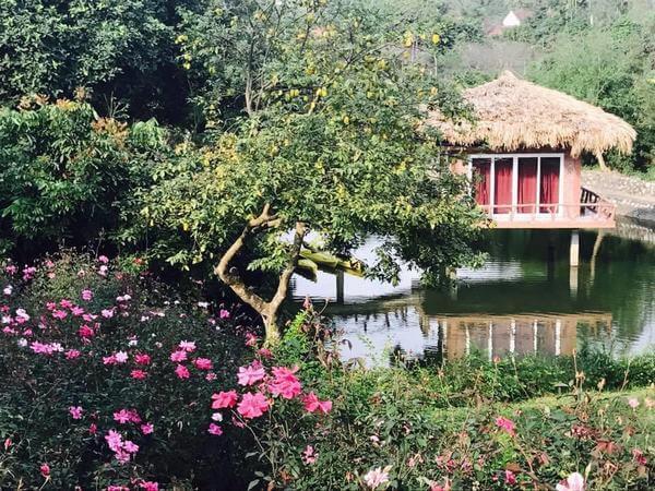 Lai Farm homestay thơ mộng với cỏ cây, hoa lá thiên nhiên