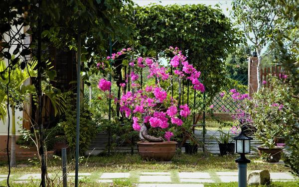Khung cảnh lãng mạn, thơ mộng của Sping Garden
