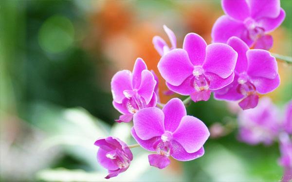 Làm thế nào để kinh doanh hoa lan mang lại hiệu quả cao nhất?