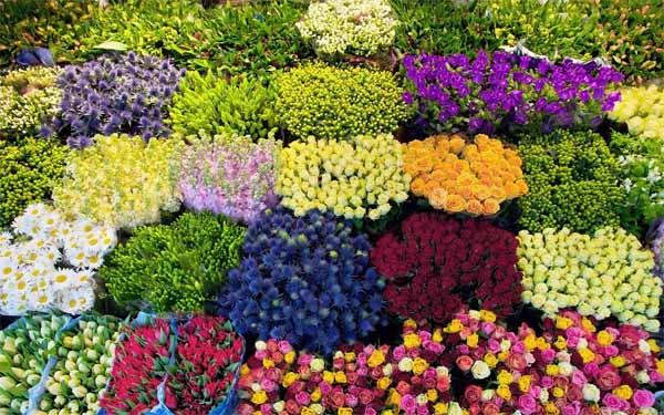 Kinh doanh hoa tươi – Kiếm được lợi nhuận siêu khổng lồ