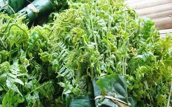 Rau dầm tang – Ngọt bùi hương vị vùng cao Tây Nguyên