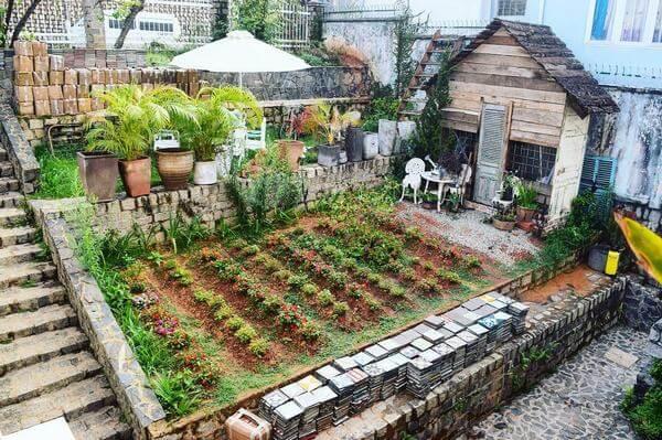 Sân vườn homestay trồng các loại hoa