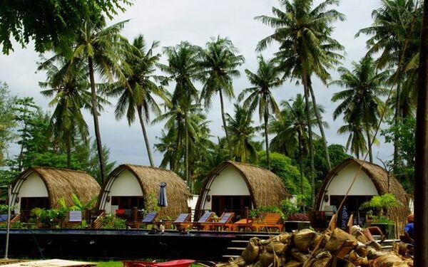 Hàng dừa xanh mát tạo nên khung cảnh thoáng đãng của resort bungalow