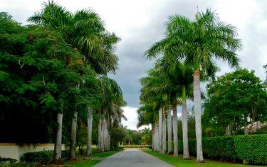 Kiến tạo cảnh quan thiên nhiên với các loại cây trồng trong resort