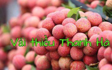 Vải thiều Thanh Hà – Đặc sản quả ngọt nức tiếng vùng đất Hải Dương