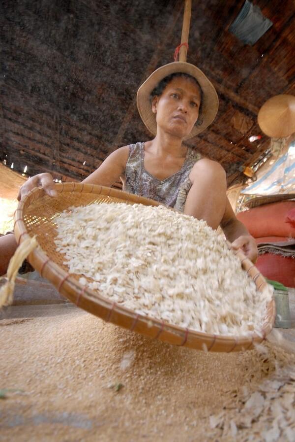 Sau khi giã cốm xong là công đoạn sàng, sảy hết vỏ trấu để thu được những hạt cốm trong ngần