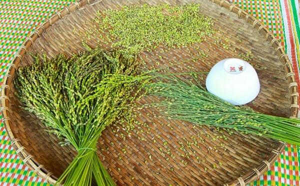 Những hạt ngọc trời sau khi thu hoạch từ ngoài đồng về sẽ được đập ra để chuẩn bị cho các công đoạn tiếp theo