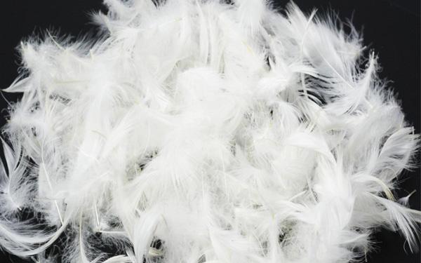 Gối được làm từ lông của các loại gia cầm