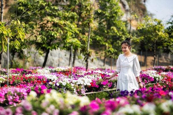 Vườn hoa khoe sắc thắm vào ngày hè