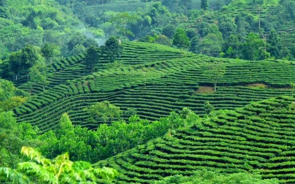 """Suối Giàng – Kinh nghiệm du lịch """" Đệ nhất kỳ quan trà Việt Nam"""""""