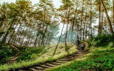 Rừng thông Yên Minh: Điểm đến lý thú dành cho phượt thủ