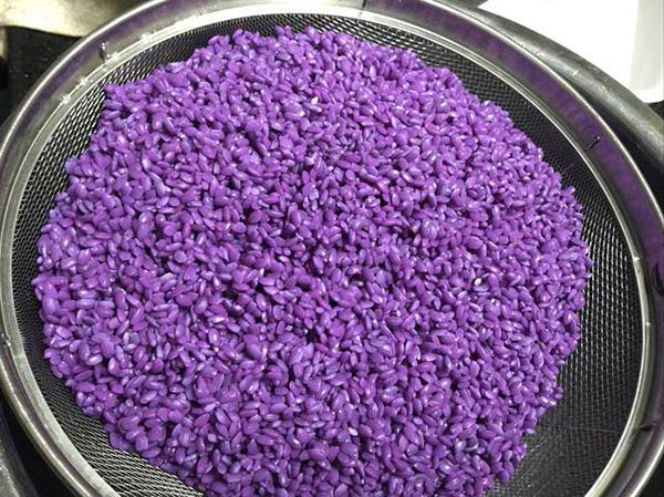 Gạo nếp được ngâm qua nước lá cẩm