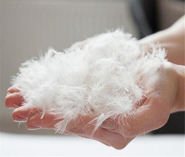 Nguyên liệu chính làm chăn lông vũ là từ lông của các loài thủy cầm