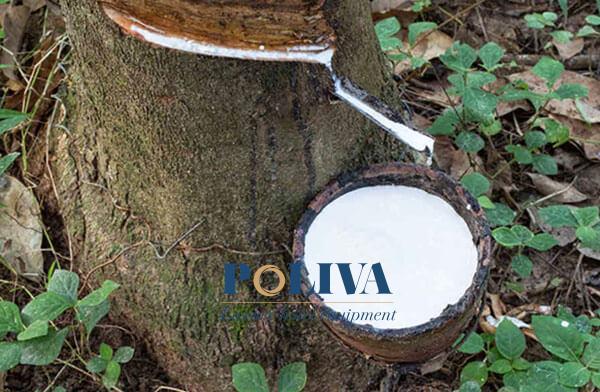Gối cao su thiên nhiên được cấu tạo hoàn toàn từ mủ cây cao su